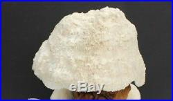 Vtg Retro 6 Trippy Large Magic Mushroom Coral Top Table Driftwood Lamp MCM